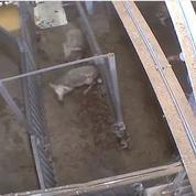 Enquête ouverte après une nouvelle vidéo choc tournée dans un abattoir du Gard