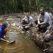 En Guyane, tracer chaque grain d'or est désormais possible