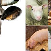 Testez vos connaissances sur le Salon de l'Agriculture