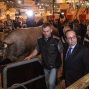 Le projet de Hollande pour soulager les éleveurs