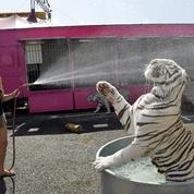 La Ciotat refuse les cirques qui utilisent des animaux sauvages