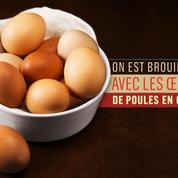 Les supermarchés abandonnent peu à peu les œufs de poules élevées en batteries