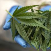 Cannabis : le gouvernement accusé de vouloir lever un écran de fumée