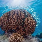 Un nouvel objectif pour Tara :les coraux du Pacifique