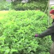 À la ferme du Bec Hellouin, permaculture rime avec rendement