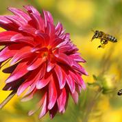 Ouvrez un «restaurant» pour abeilles et bourdons
