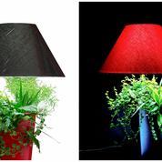 Lumipouss: la lumière à fleur de pot
