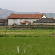 Trois quarts des Nord-Coréens ont besoin d'une aide humanitaire selon l'ONU