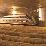 L'étonnant succès d'une coopérative française dans la fabrication de malt