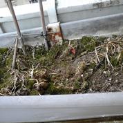 La mousse est-elle nuisible pour les plantes en pot ?