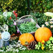 Au potager, cultivez des plantes belles à croquer