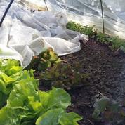 Des solutions pour empêcher vos plantes de grelotter
