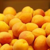 Inquiétudes autour de la production d'abricots