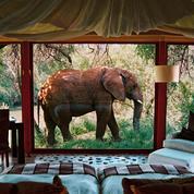 Safari sur un plateau