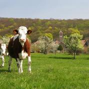La filière bio apporte de meilleures marges pour les agriculteurs