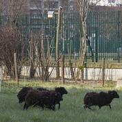 Un déficit d'espaces verts en région parisienne