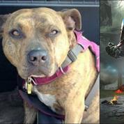 La belle histoire du chien abandonné et sauvé par Transformers 5