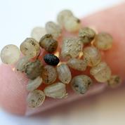 Les effets délétères des microbilles de plastique sur les poissons de la Baltique
