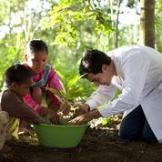 Quand les plantes font jaillir la lumière en Amazonie