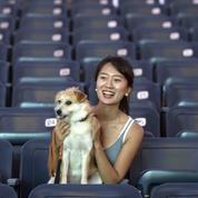 Comme des bêtes :les animaux ont aussi le droit d'aller au cinéma