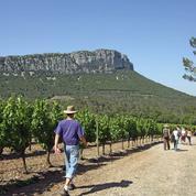 La tension monte d'un cran chez les viticulteurs du Languedoc-Roussillon