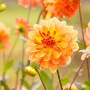 Plantez des fleurs et des légumes pour l'automne