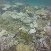 Les coraux des Maldives en danger en raison du changement climatique
