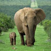 Il faut sauver les grands mammifères