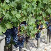 La production française de vin a baissé de 10%