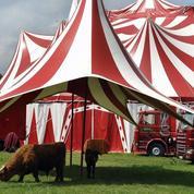 Les cirques sur le pied de guerre