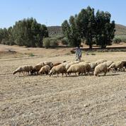 La sécheresse s'aggrave dangereusement en Tunisie