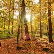 Pourquoi l'automne ne commence-t-il pas (toujours) le 21 septembre ?