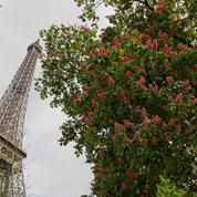 La mairie de Paris va offrir des arbres à ses citoyens