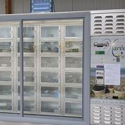 Un distributeur automatique pour acheter des fruits de mer à toute heure