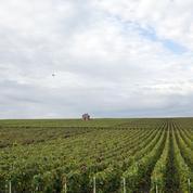 Vin : les vendanges les plus basses depuis 30 ans