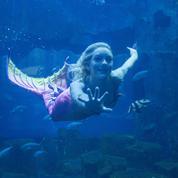 Une sirène plonge à l'Aquarium de Paris