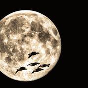Observer les oiseaux migrateurs en regardant la lune