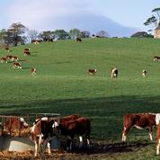 L'Irlande veut doubler ses exportations agricoles d'ici 2025