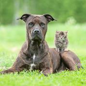 Et maintenant un crédit d'impôt… pour stériliser les animaux de compagnie