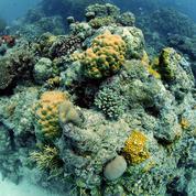 Grande barrière de corail : l'Australie face à ses contradictions