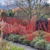 Un livre sublime loue la beauté du jardin même en hiver