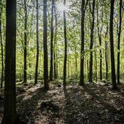 Le renouvellement de la forêt française en sursis