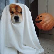 Costumes de Halloween : le meilleur et le pire des réseaux sociaux