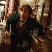 Les Animaux fantastiques :le chaudron d'Harry Potter bout encore