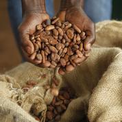 Barry Callebaut met les bouchées doubles pour garantir la survie du chocolat