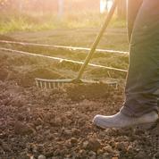 Jardin: idées et remèdes pour soigner la terre