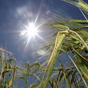 L'État cherche 100 millions pour les petites retraites agricoles