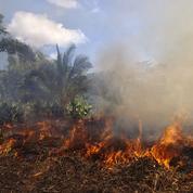 À Madagascar, la tradition du brûlis menace la forêt et l'avenir des habitants