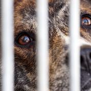 PETA dénonce le financement d'expérimentations animales par l'AFM-Téléthon