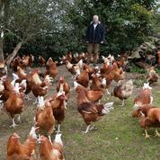 Un nouveau cas de grippe aviaire est soupçonné en France